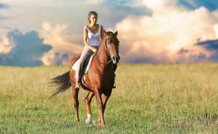 cheval longe ethologique