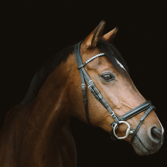 longe de cheval